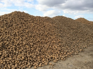 Potato mountain!
